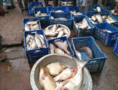 আক্কেলপুরে অক্সিজেন স্বল্পতায় মরে ভেসে উঠছে মাছ