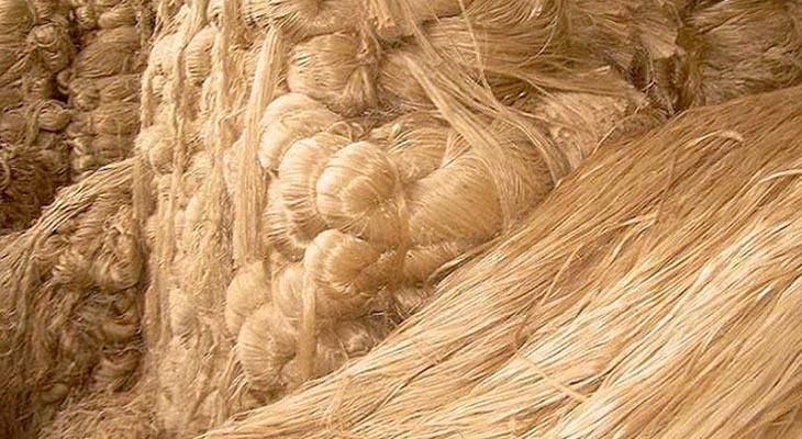 বৈরি আবহাওয়ায় দক্ষিণাঞ্চলে কাঙ্খিত পাট উৎপাদন হয়নি